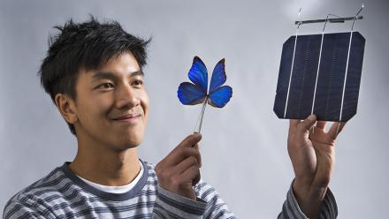 Co-researcher Kevin Le from ANU with a blue Morpho butterfly and a solar cell. Photo: Stuart Hay.