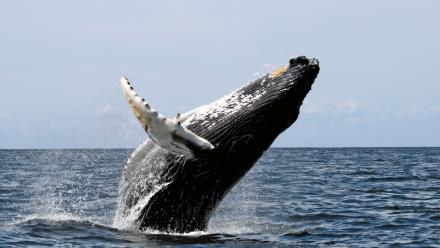 Whaling in the Southern Ocean has sparked heated confrontations between Japan and Australia.