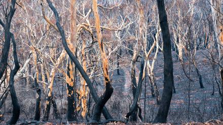 Moreton National Park Bushfire Photo:Jamie Kidson
