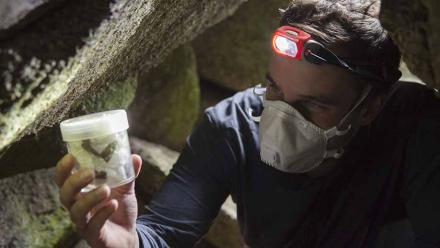 Jesse Wallace in a cave examining a bogong moth specimen. Photo by Lannon Harley.