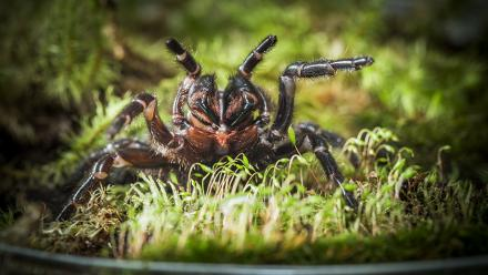 Funnel web spider, 2015. Photo by Stuart Hay.