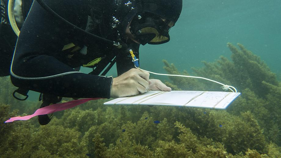 Researcher monitoring fish behaviour on Ningaloo Reef. Photo by James Walsh.