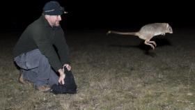 Mulligans Flat Woodland Sanctuary general manager Jason Cummings releases a bettong in at Mulligan's Flat.