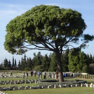 The Lone Pine at Gallipoli.